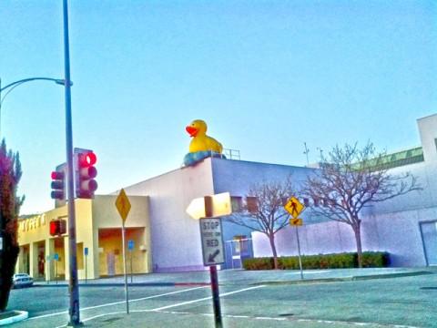 quack co