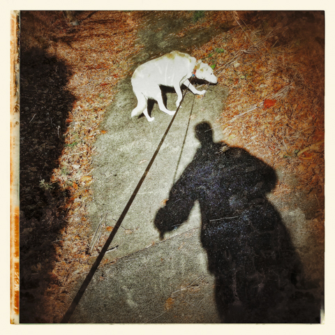 beyond the shadow of a dog