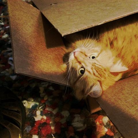 box.cat