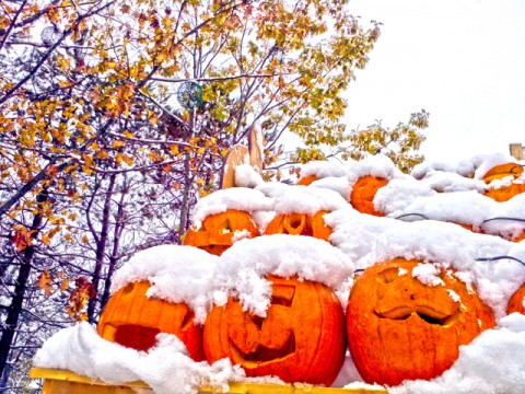 jack frost is the new jack o'lantern