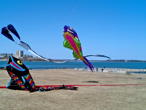 the bug light kite flounder production of gone with the wind