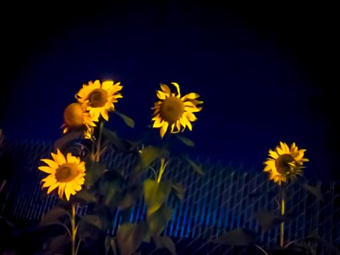planting an attitude at dusk