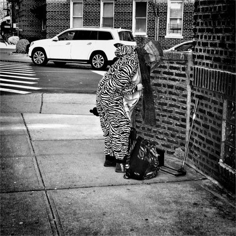 urban zebra of east 24th and kings hwy